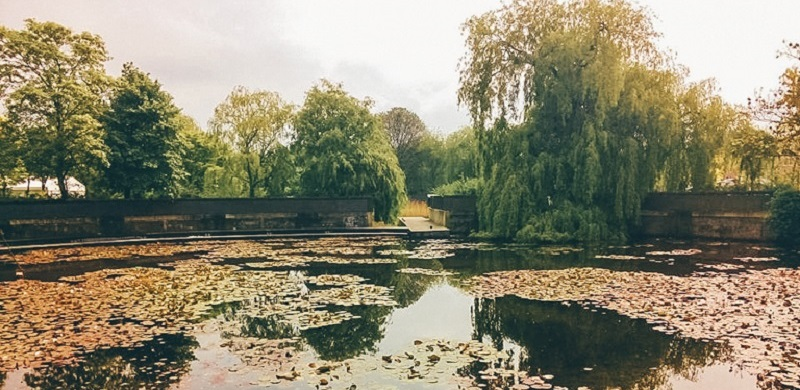 A former polluted factory turned into a pond