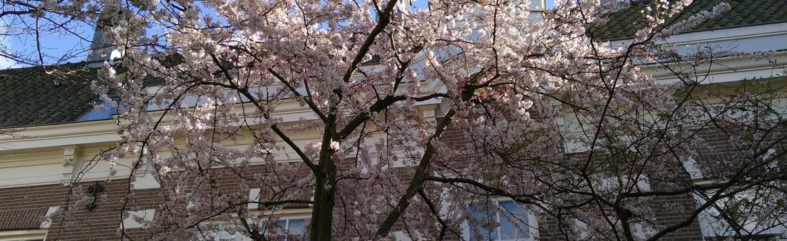 Spring blossom in an inner courtyard in Amsterdam